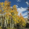 Aspens and Clouds