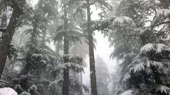 snow on evergreeens
