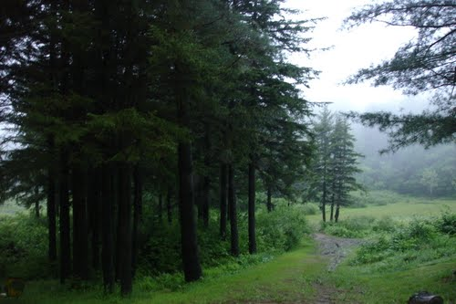VT Pine forest